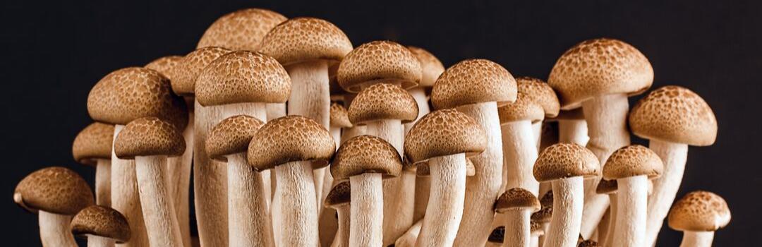 mushroom culitvation